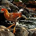 Chicken 3277 F by James Ahn