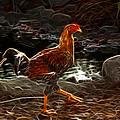 Chicken 3278 F by James Ahn
