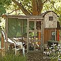 Chicken Coop On The Farm by Artist and Photographer Laura Wrede