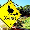 Chicken Crossing by Ed Weidman