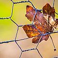 Chicken Wire Leaf. by Gary Gillette