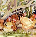 Chickens In The Hedge II by Christine Burn