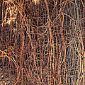 Chickenwire Rusty by Cathy Anderson