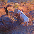 Chico And Paco The Mountain Dogs by James Welch