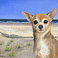 Chihuahua At Sea Isle City New Jersey by Peggy Dreher