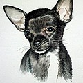 Chihuahua Black 2 by Christopher Shellhammer