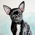 Chihuahua Black by Christopher Shellhammer