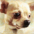 Chihuahua Dog - Painterly by Wingsdomain Art and Photography