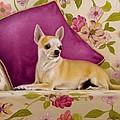 Chihuahua II by John Silver