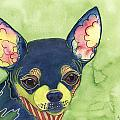 Chihuahua by Greg and Linda Halom