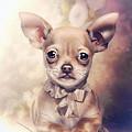 Chihuahua Puppy by Cindy Grundsten