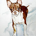 Chihuahua White Chocolate Color. by Christopher Shellhammer