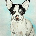 Chihuahua White With Black Spots by Christopher Shellhammer