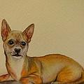 Chihuahua by Zina Stromberg