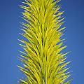 Chihuly's Yucca by Lee Kirchhevel
