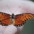 Child And Butterfly - We Shall Renew Again by Carolina Liechtenstein