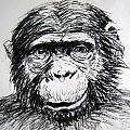 Chimp by Dina Day