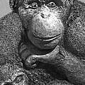 Chimpanzee Carving by Dan Sabin