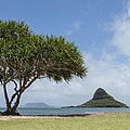 Chinamans Hat With Tree - Oahu Hawaii by Brian Harig