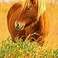 Chincoteague Pony Profile by Alice Gipson