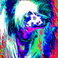 Chinese Crested Dog 20130125v3 by Wingsdomain Art and Photography