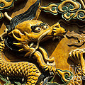 Chinese Dragon Portrait by James Brunker