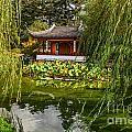 Chinese Garden Breeze by Jamie Pham