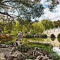 Chinese Garden Bridge by Jamie Pham