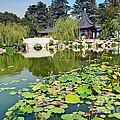 Chinese Garden - Huntington Library. by Jamie Pham