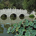 Chinese Garden Scene by Cheryl Hardt Art
