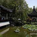 Chinese Gardens The Huntington Library by Jason O Watson