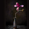Chinese Magnolia In Vase by Endre Balogh