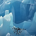 Chinstrap Penguins On Blue Iceberg by Bryan and Cherry Alexander