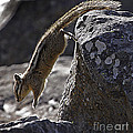 Chipmunk   #2155 by J L Woody Wooden