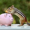Chipmunk Saving Peanut for a Rainy Day