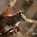 Chippy Perched by Cheryl Baxter