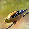 Chirping Gold Finch - Painted Effect by Debbie Portwood