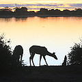 Chobe River At Sunset by Karen Zuk Rosenblatt