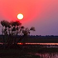 Chobe River Sunset by Amanda Stadther