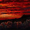 Cholla Cactus On Fire by Walt Sterneman