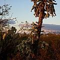 Cholla Cactus View by Kerri Mortenson