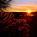 Cholla On Fire by Kelly Gibson