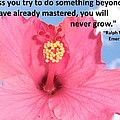 Choose Your Quote Choose Your Picture 5 by Michele Penn