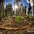 Chop Up Log by Blake Richards