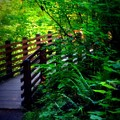 Chosen Path by Amanda Eberly-Kudamik