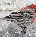 Christmas Blessings Finch Greeting Card by Debbie Portwood