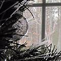 Christmas Bulb by Katie Wing Vigil