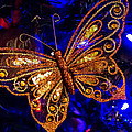 Christmas Butterfly by Mick Anderson
