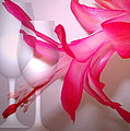 Christmas Cactus And Two Glasses by Joyce Dickens
