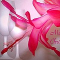 Christmas Cactus And Two Glasses - Merry Christmas by Joyce Dickens